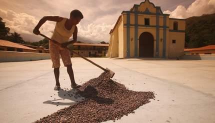 shu-Venezuela-Chuao-Plantation-Cacoa-1183530166-430x246