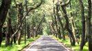 Island life in Ojika - Oth-Japan-Ojika-Road-1440x823