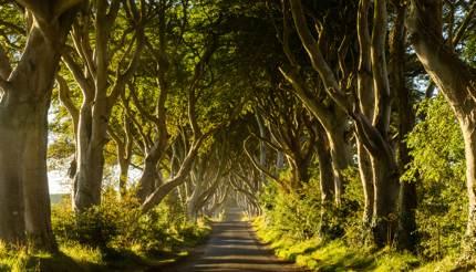 The Dark Hedges tree tunnel