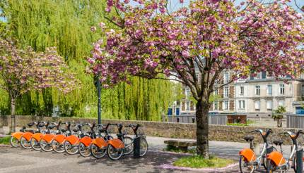 Cherry blossoms and bikes in the park, Nantes, France