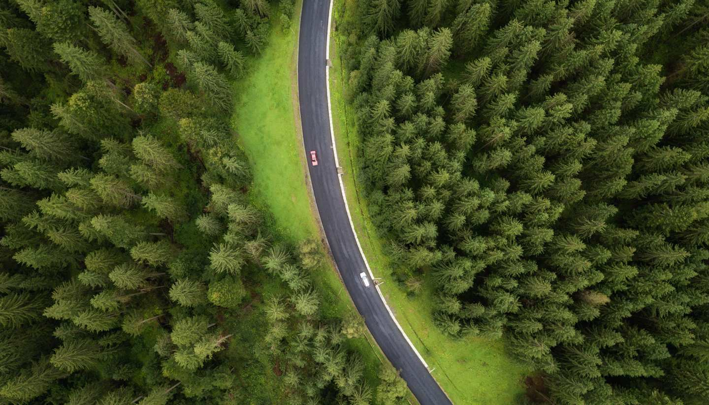Home - Aerial view of a pine forest