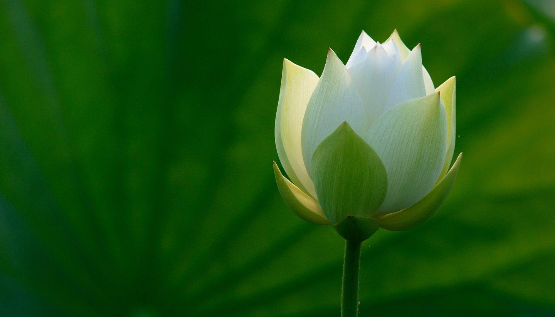 Home - Lotus