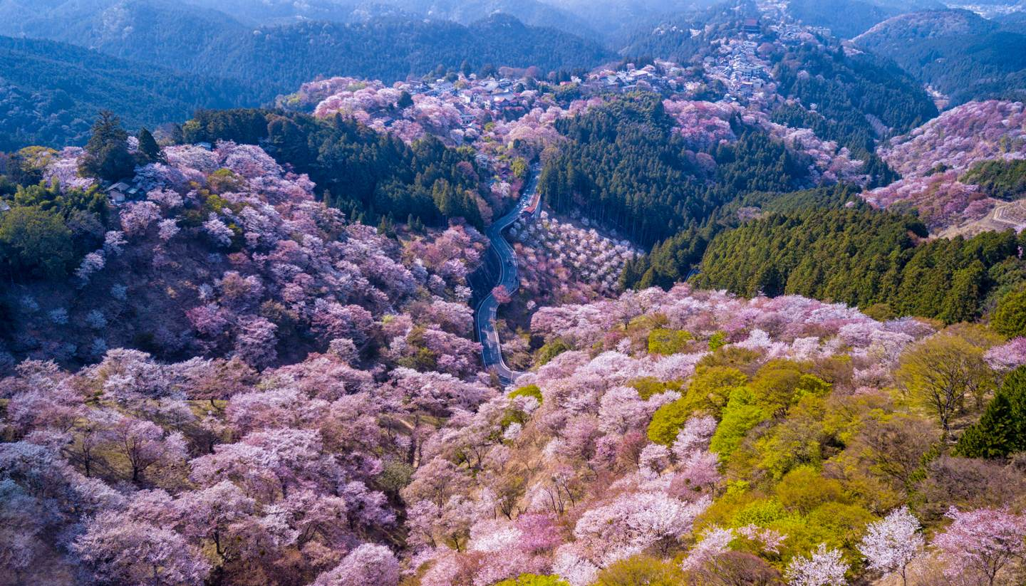 Where to go on holiday in April 2020 - Mount Yoshino, Nara, Japan