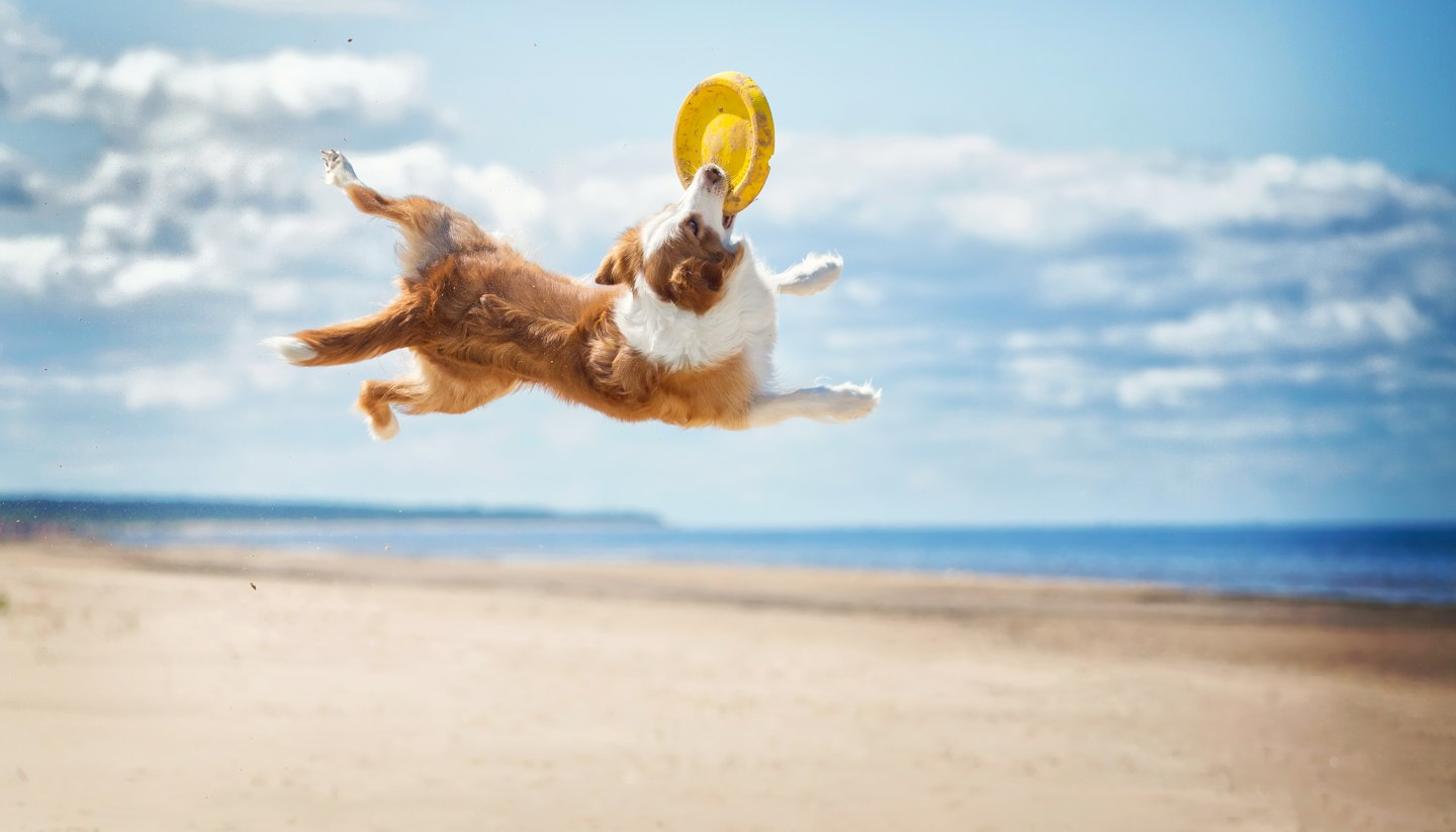 Home - Dog playing on the beach