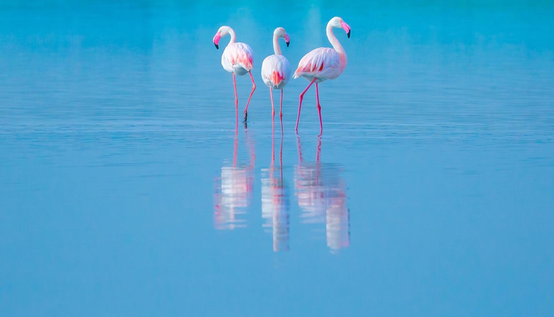 Home - Flamingos
