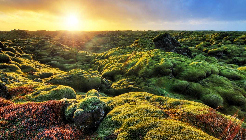 Home - Eldhraun, Iceland
