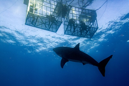 Cage diving